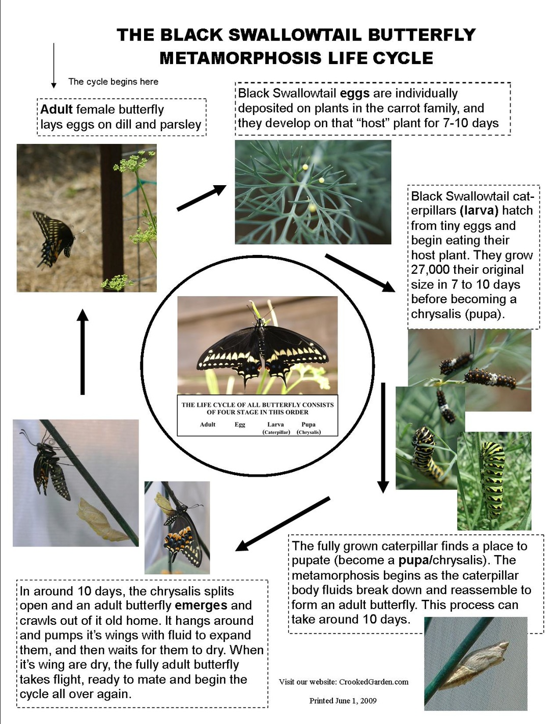 butterfly garden swallotail life cycle